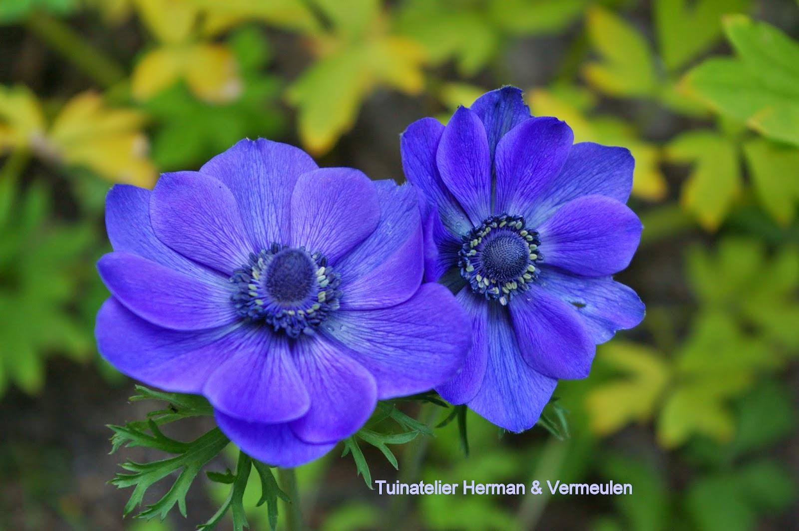 tuinontwerp laten maken kosten