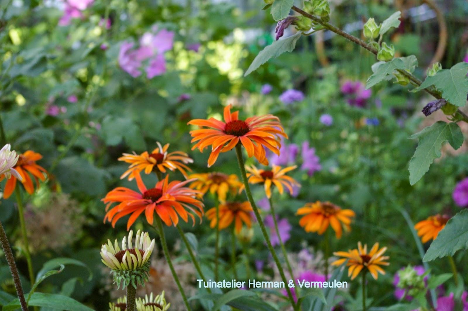 tuinontwerp beplantingsplan