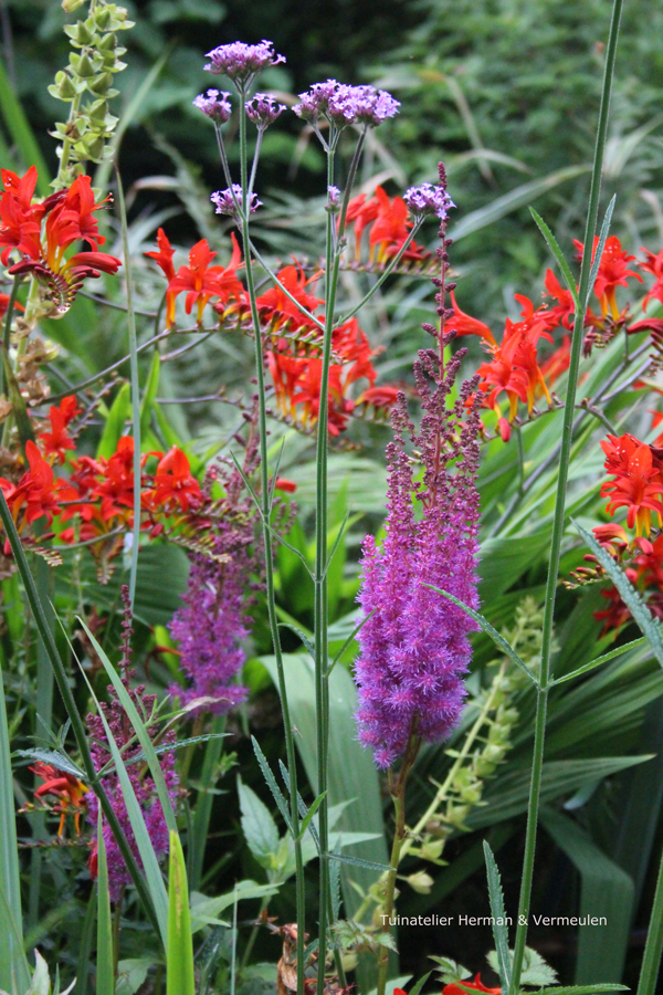Tuinontwerp natuurlijke tuin