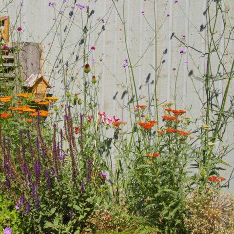 bloemen in een natuurlijke tuin