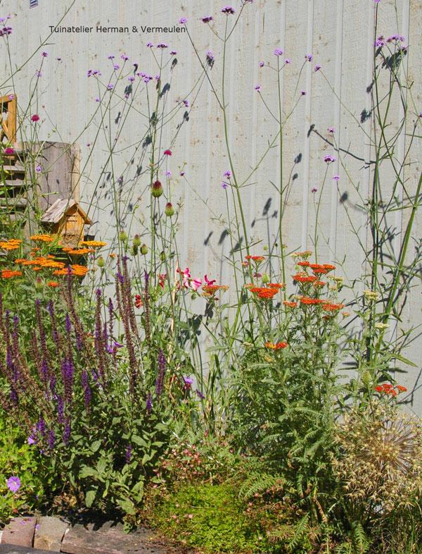 natuurlijke felgekleurde bloemen in achtertuin