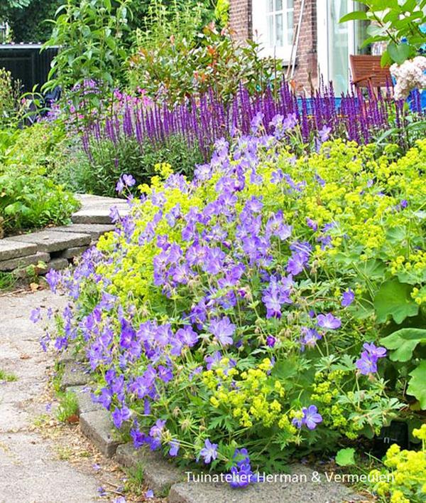 sterke planten geranium rozanne en vrouwenmantel