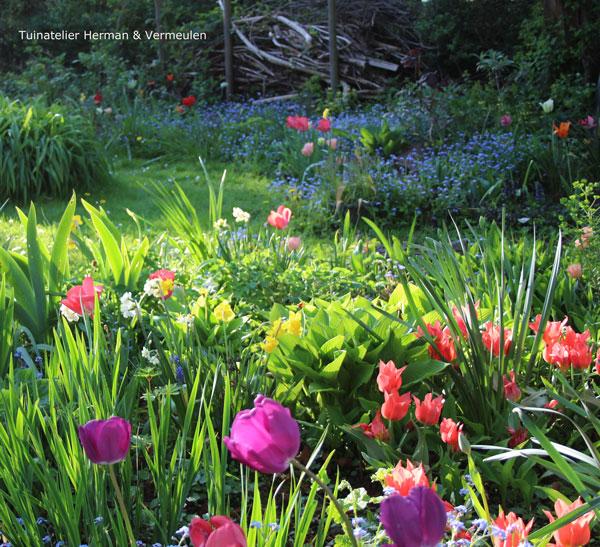 natuurlijke en romantische tuin met gekleurde tulpen