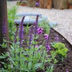 Achtertuin met gekleurde bloemen, detail salvia caradonna