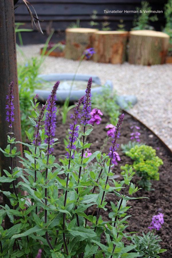 salvia, euphorbia en muurbloem zijn fijne tuinplanten
