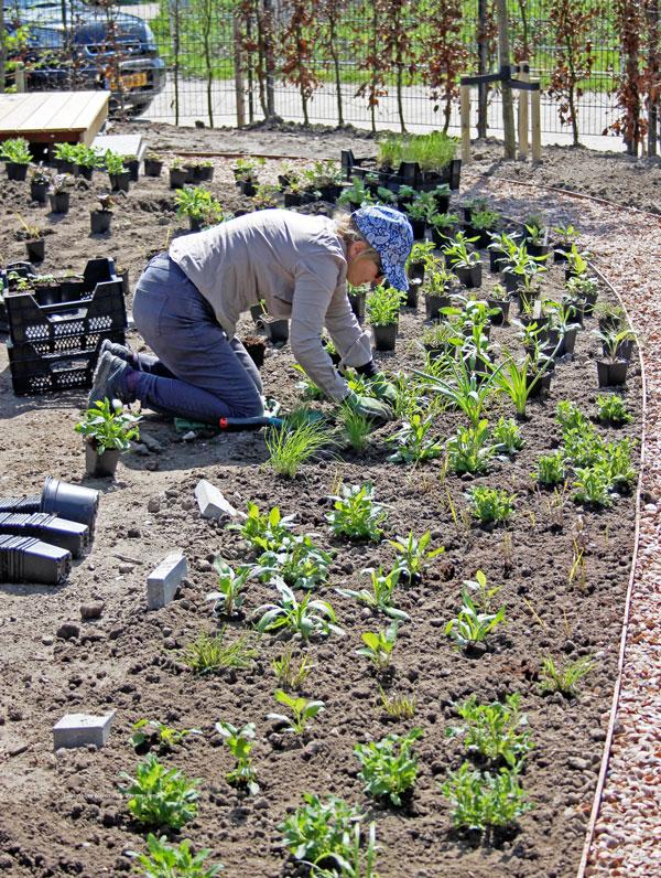 tuinontwerp beplantingsplan kosten