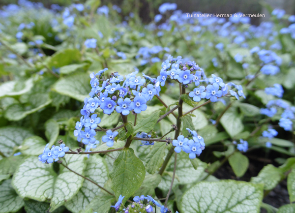 mooie lentebloeiers voor je tuin