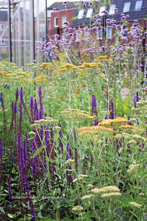 tuinontwerp gezamenlijke binnentuin