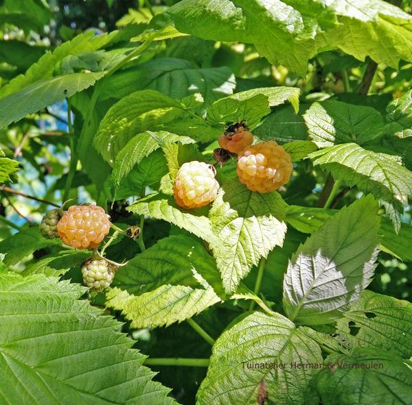 voedselbos maken en je tuin