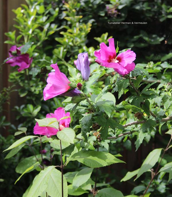 planten die tegen droogte kunnen