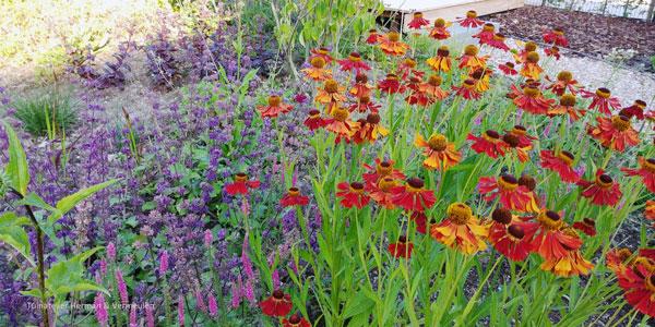 kleurige bloemen langs het pad