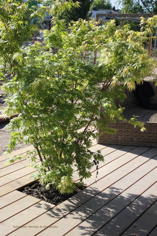 natuurlijke tuin bij moderne villa
