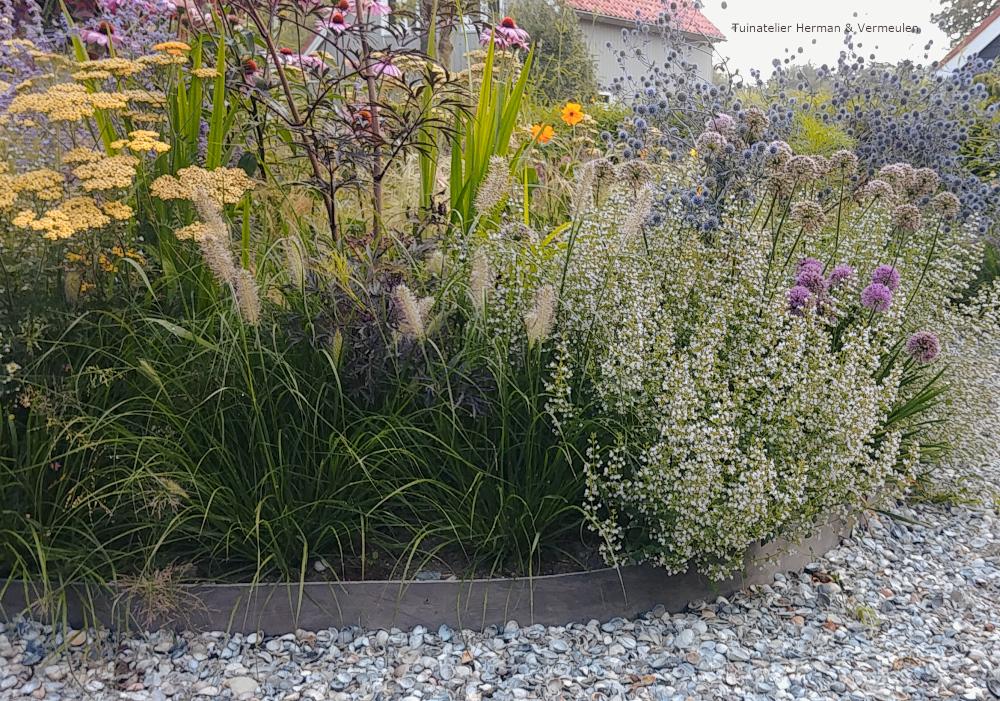natuurlijke tuin siergrassen